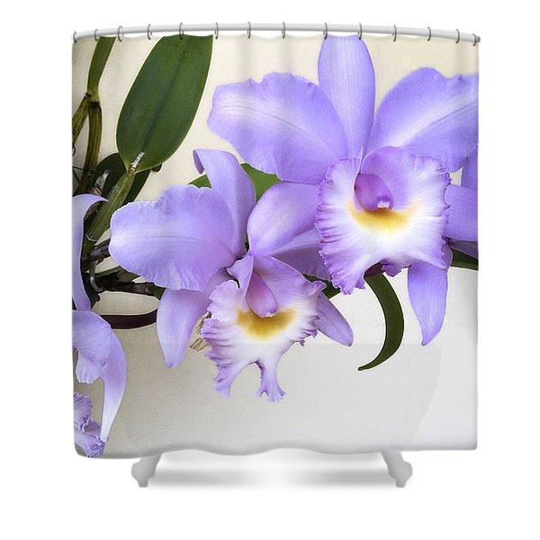 Cattleya Orchid Shower Curtain