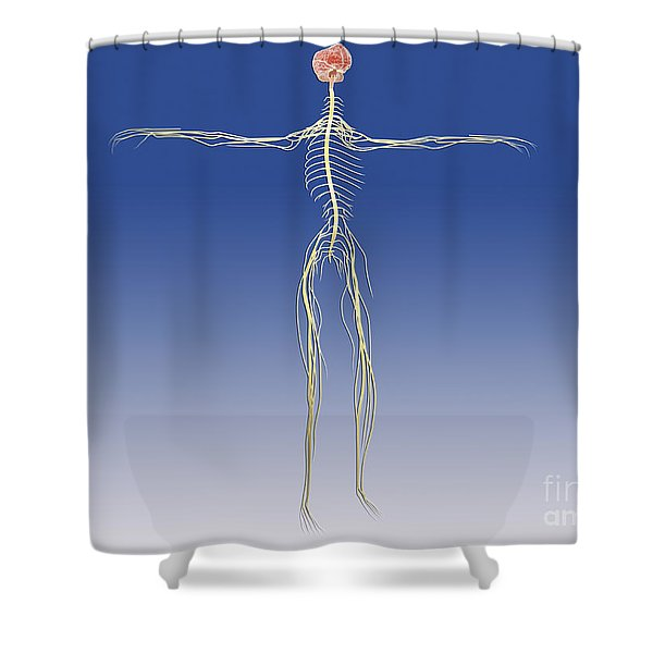 Central Nervous System With Human Brain Shower Curtain