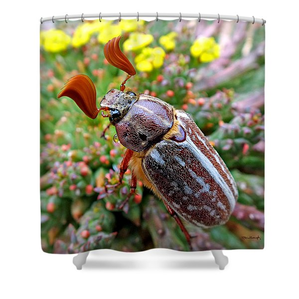 Chafer Beetle On Medusa Succulent 2 Shower Curtain