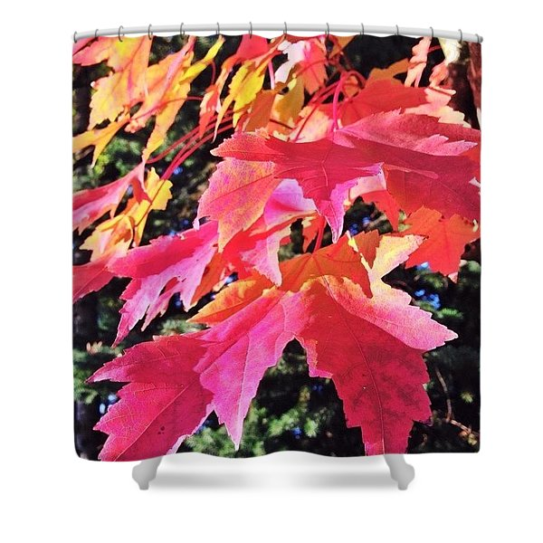 Changing Seasons Red Maple Leaves Shower Curtain