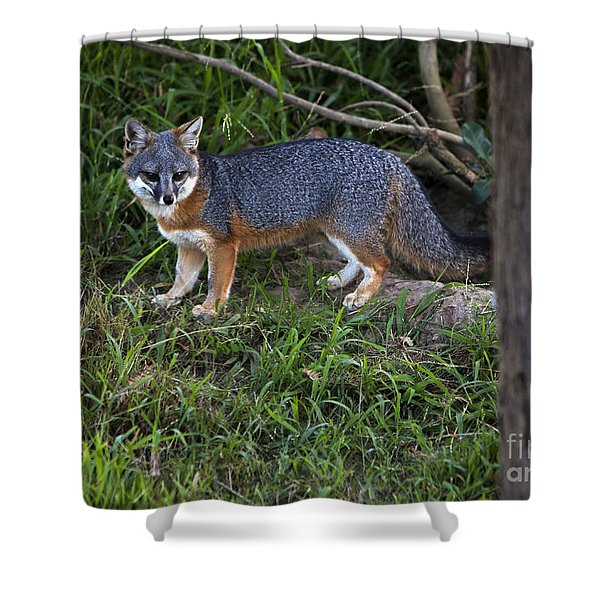 Shower Curtain featuring the photograph Channel Island Fox by David Millenheft