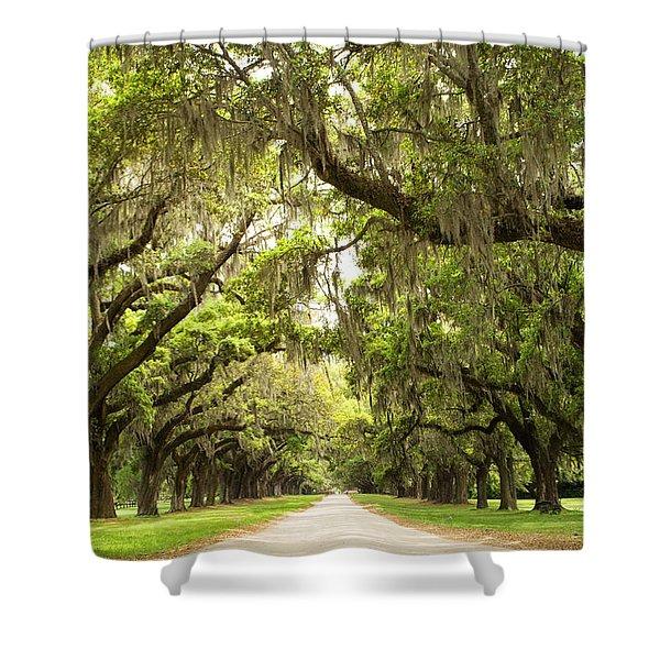 Charleston Avenue Of Oaks Shower Curtain