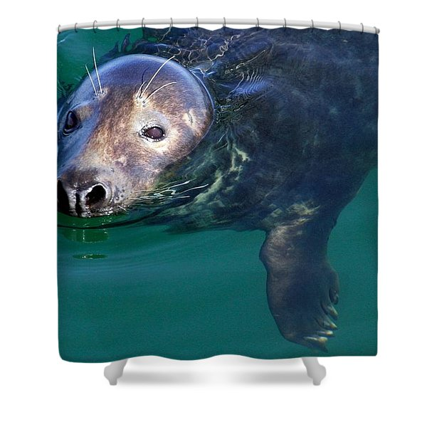 Chatham Harbor Seal Shower Curtain