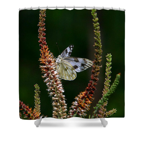 Checkered White On An Indigo Shower Curtain