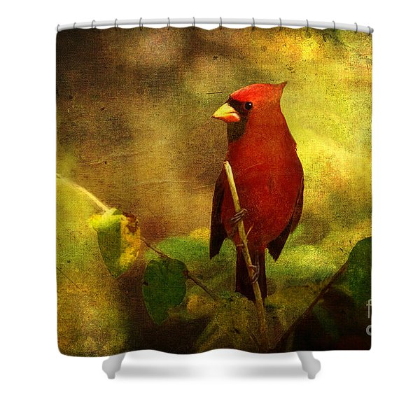 Cheery Red Cardinal  Shower Curtain
