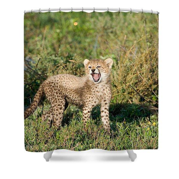 Cheetah Cub Acinonyx Jubatus Yawning Shower Curtain