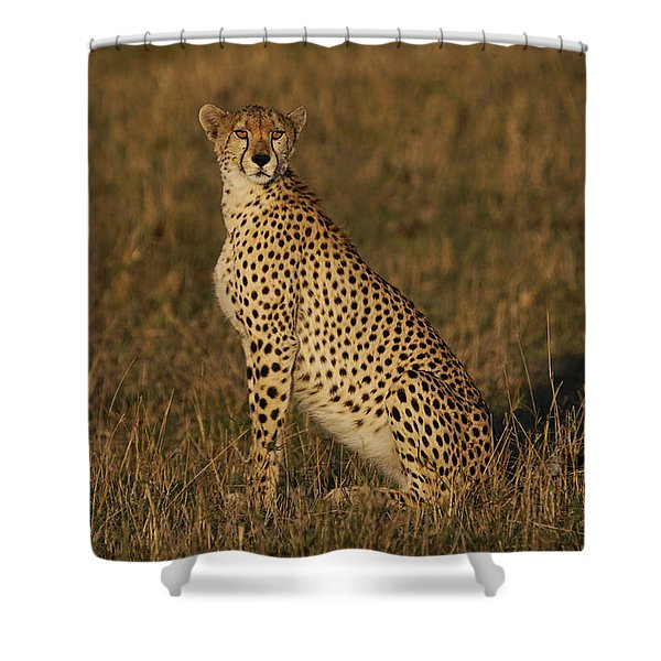 Cheetah On Savanna Masai Mara Kenya Shower Curtain