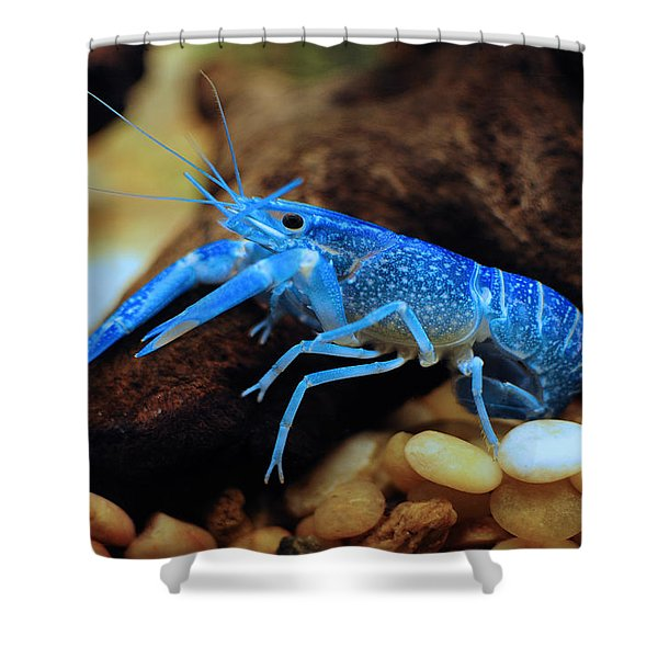 Cherax Quadricarinatus Shower Curtain