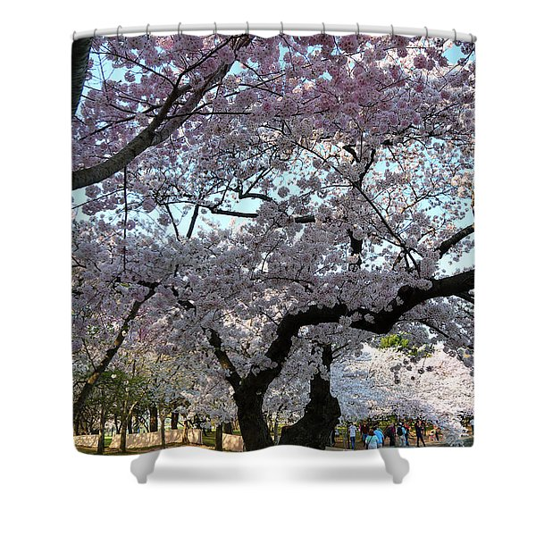 Cherry Blossoms 2013 - 044 Shower Curtain