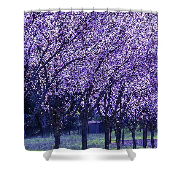 Cherry Trees In Bloom Shower Curtain