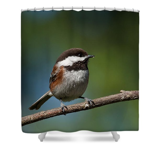 Chestnut Backed Chickadee Perched On A Branch Shower Curtain