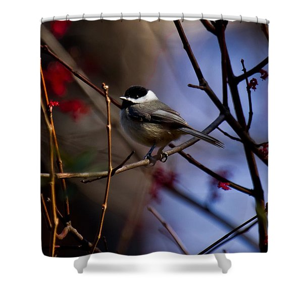 Shower Curtain featuring the photograph Chickadee by Robert L Jackson