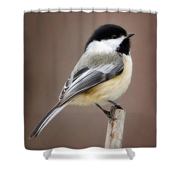 Chickadee Square Shower Curtain
