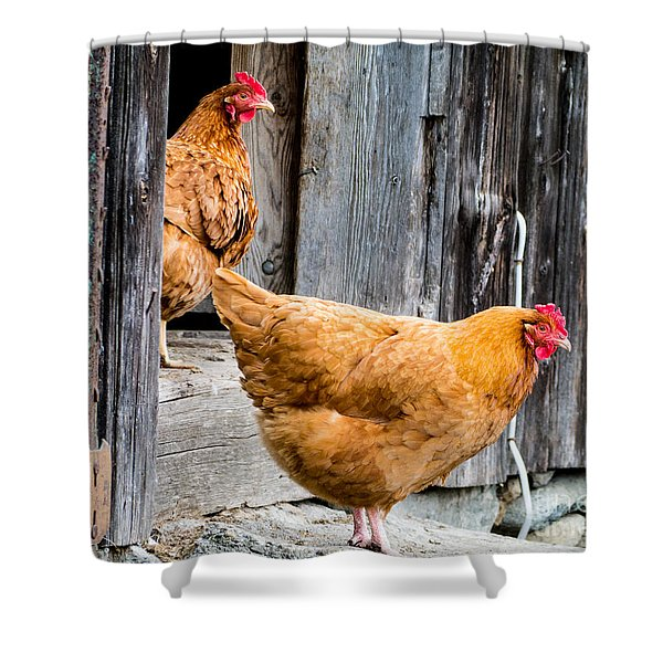 Chickens At The Barn Shower Curtain
