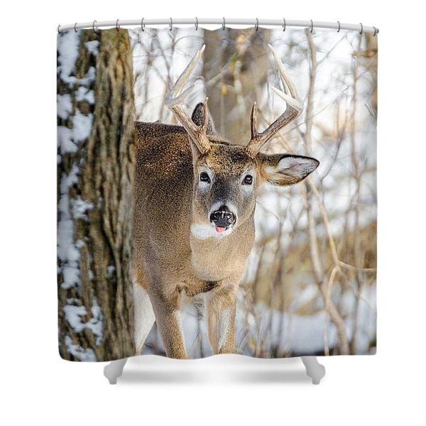 Childish Buck Shower Curtain