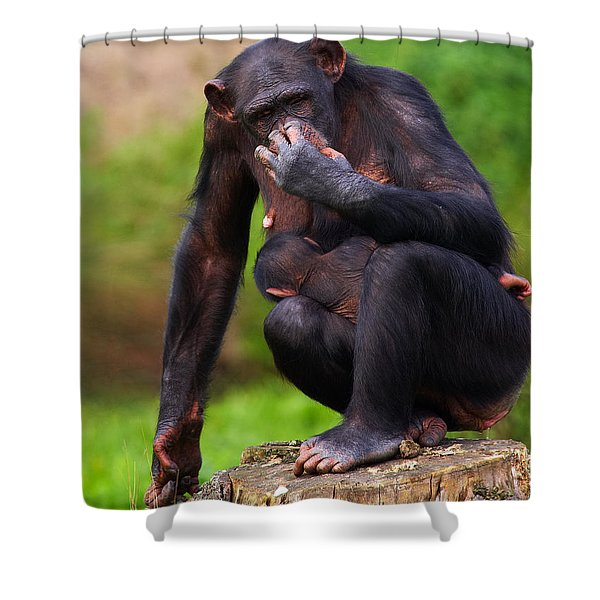Chimp With A Baby On Her Belly  Shower Curtain