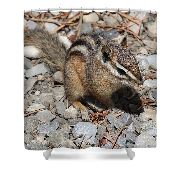 Chipmunk Shower Curtain