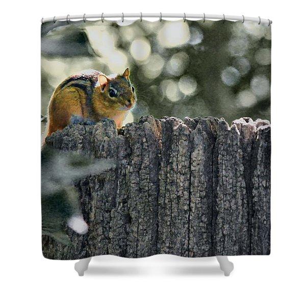 Chipmunk  Shower Curtain