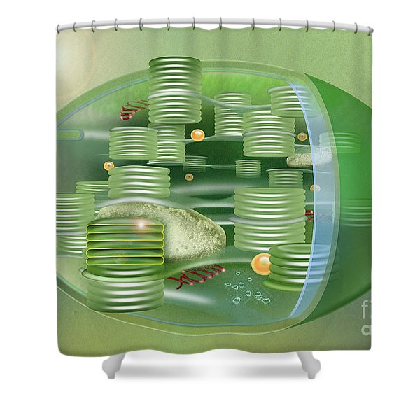 Chloroplast - Basis Of Life - Plant Cell Biology - Chloroplasts Anatomy - Chloroplasts Structure Shower Curtain