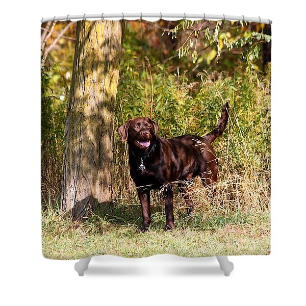 Chocolate Lab Cuteness Shower Curtain