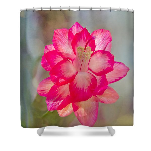 Shower Curtain featuring the photograph Christmas Cactus Bokeh by Jemmy Archer