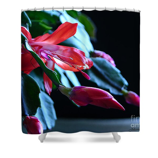 Christmas Cactus In Bloom Shower Curtain