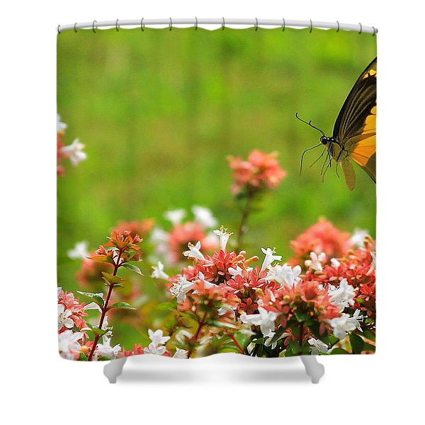 Church Hopper Shower Curtain
