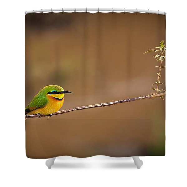 Cinnamon-chested Bee-eater Shower Curtain