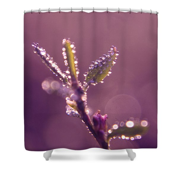 Circles From Nature - M01sqm Shower Curtain