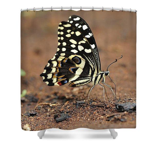 Citrus Butterfly Puddling Jozani Shower Curtain