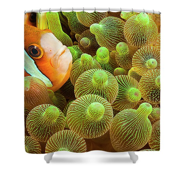Clark S Anemonefish  Amphiprion Clarkii Shower Curtain