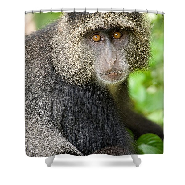 Close-up Of A Blue Monkey Cercopithecus Shower Curtain