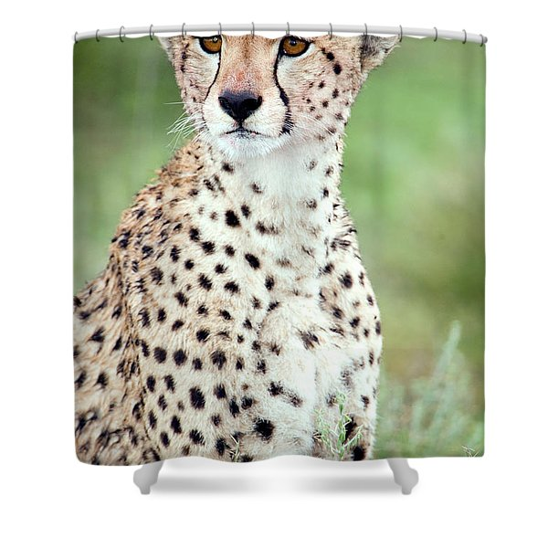 Close-up Of A Female Cheetah Acinonyx Shower Curtain
