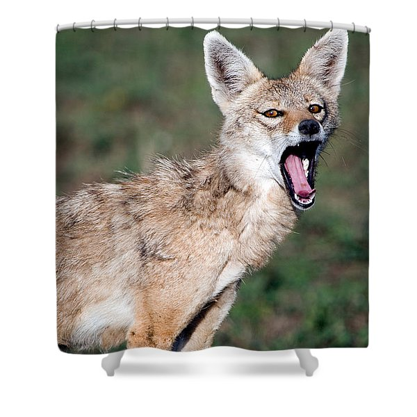 Close-up Of A Golden Jackal Canis Shower Curtain