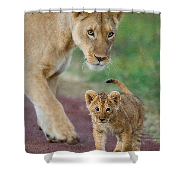 Close-up Of A Lioness And Her Cub Shower Curtain