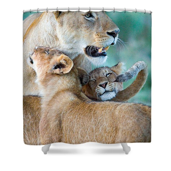 Close-up Of A Lioness And Her Two Cubs Shower Curtain