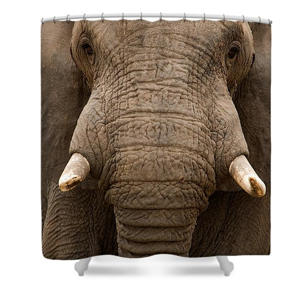 Close-up Of An African Elephant Shower Curtain