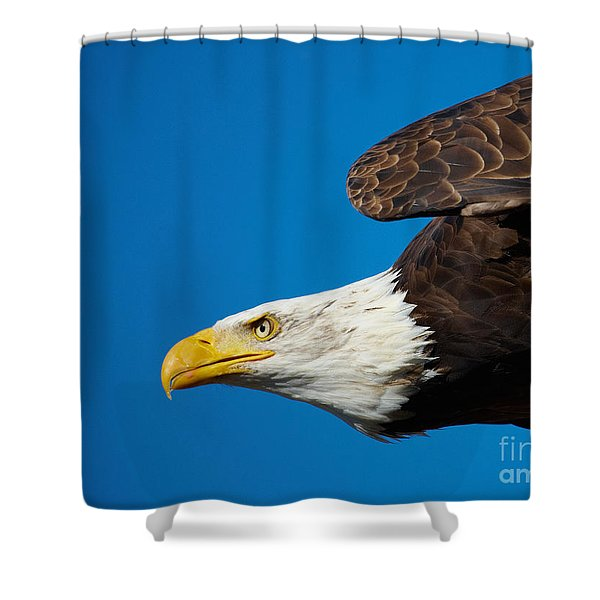 Close-up Of An American Bald Eagle In Flight Shower Curtain