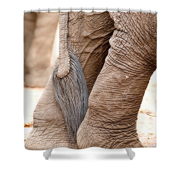 Close-up Of Legs And Tail Of An African Shower Curtain