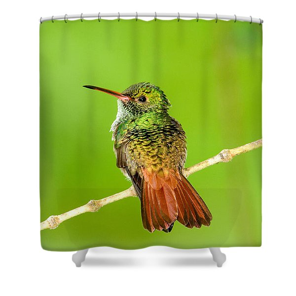 Close-up Of Rufous-tailed Hummingbird Shower Curtain