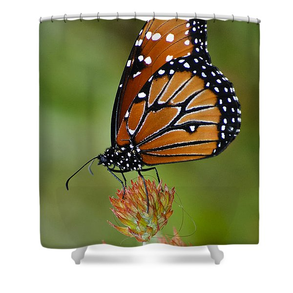 Close-up Pose Shower Curtain