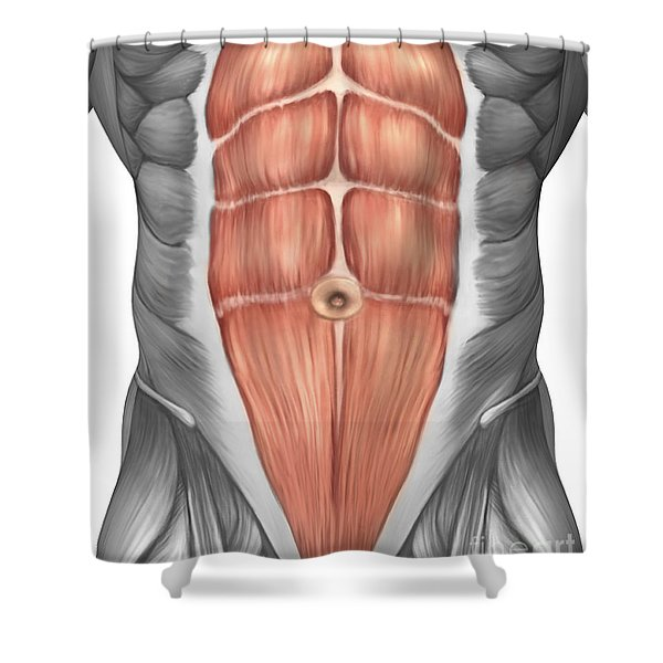 Close-up View Of Male Abdominal Muscles Shower Curtain