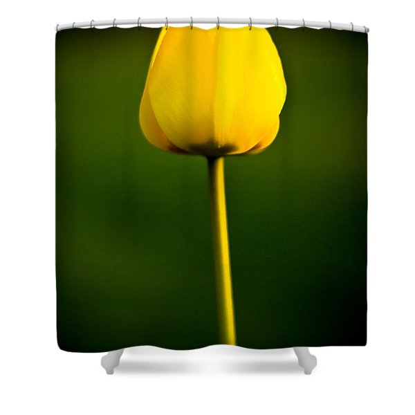 Shower Curtain featuring the photograph Closed Yellow Flower by John Wadleigh
