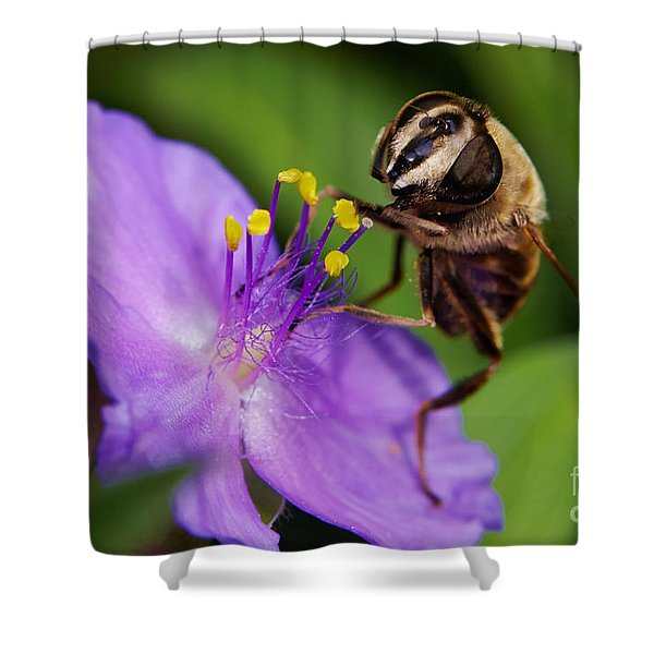 Closeup Of A Bee On A Purple Flower Shower Curtain