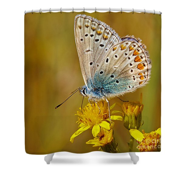 Closeup Of A Common Blue Butterfly Shower Curtain