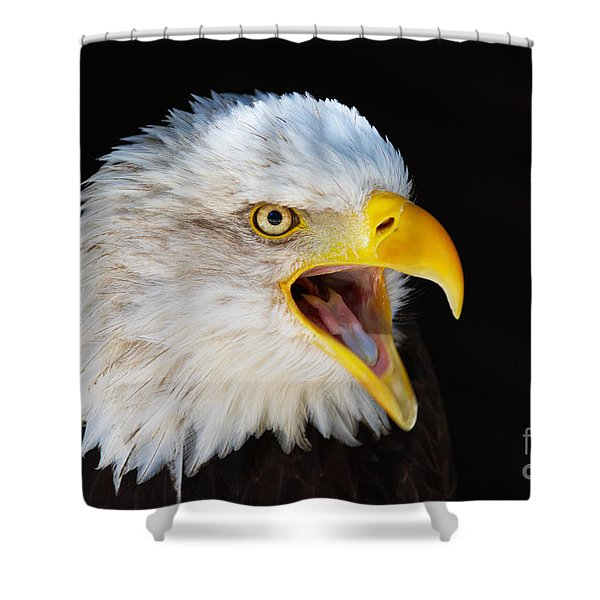 Closeup Portrait Of A Screaming American Bald Eagle Shower Curtain