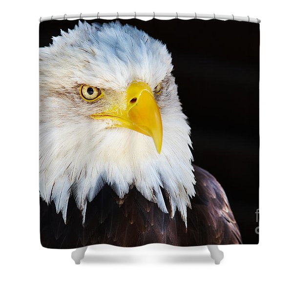 Closeup Portrait Of An American Bald Eagle Shower Curtain