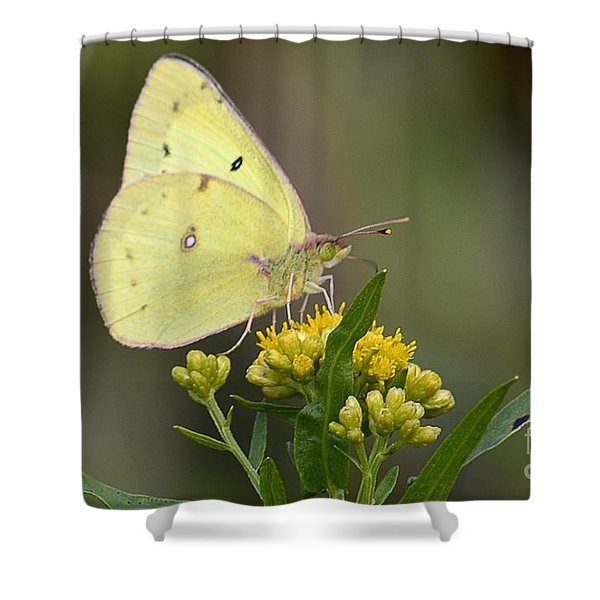 Clouded Sulphur Shower Curtain