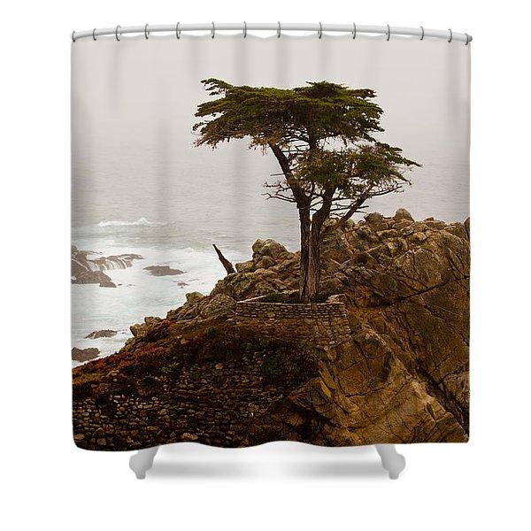 Coastline Cypress Shower Curtain