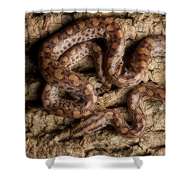 Colombian Rainbow Boa On Tree Bark Shower Curtain